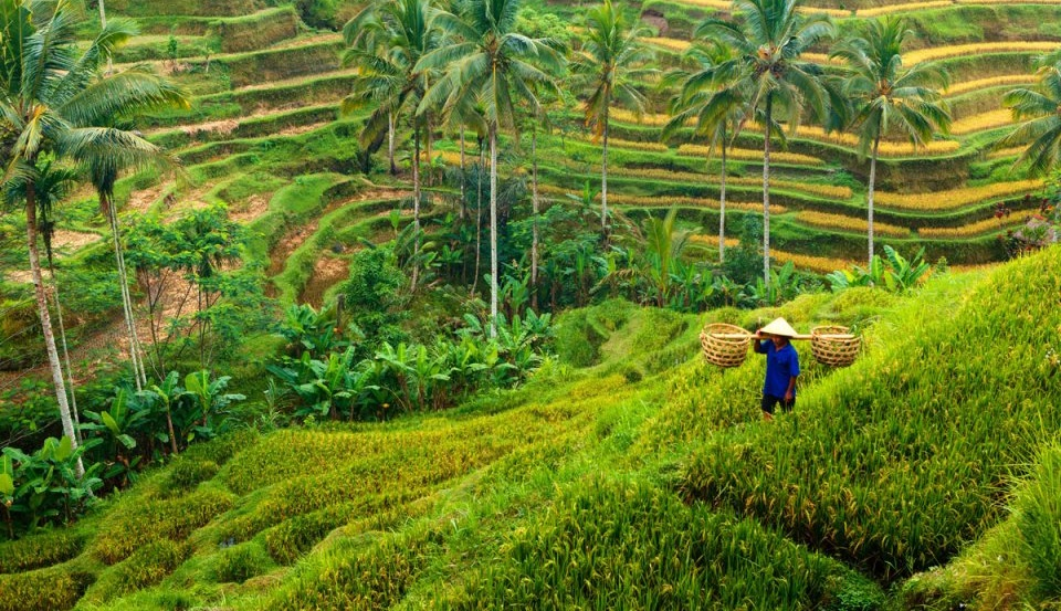 tailor made holidays in bali