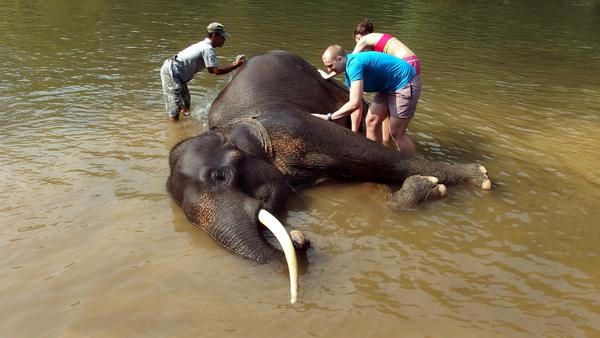 indonesia wildlife tangkahan elephant sanctuary