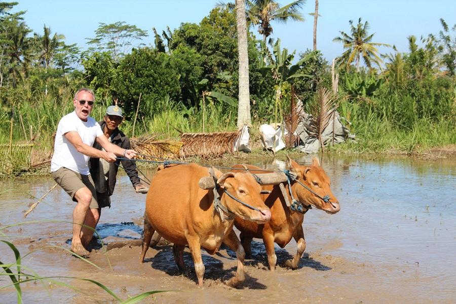 rural balinese life