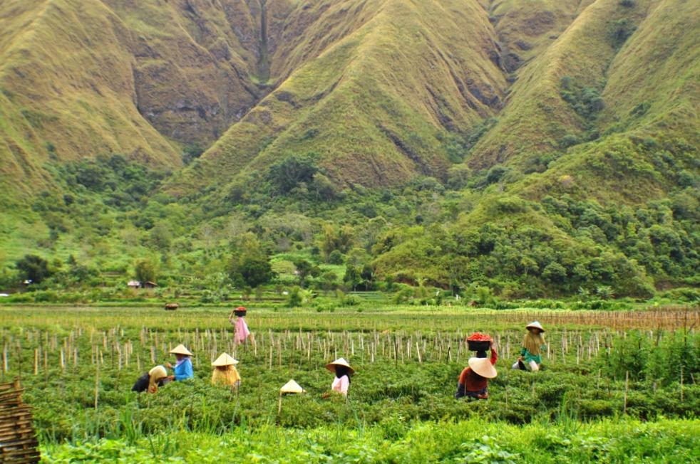 sembalun village rinjani