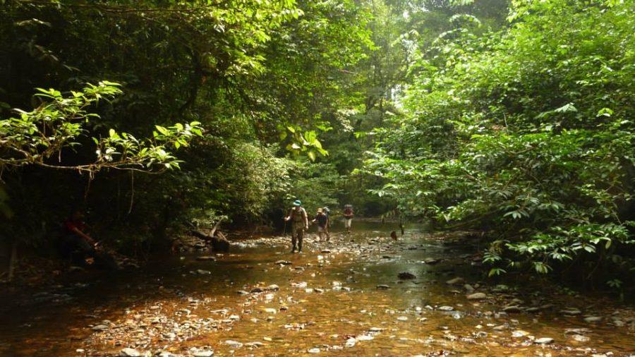 betung-kerihun-national-park