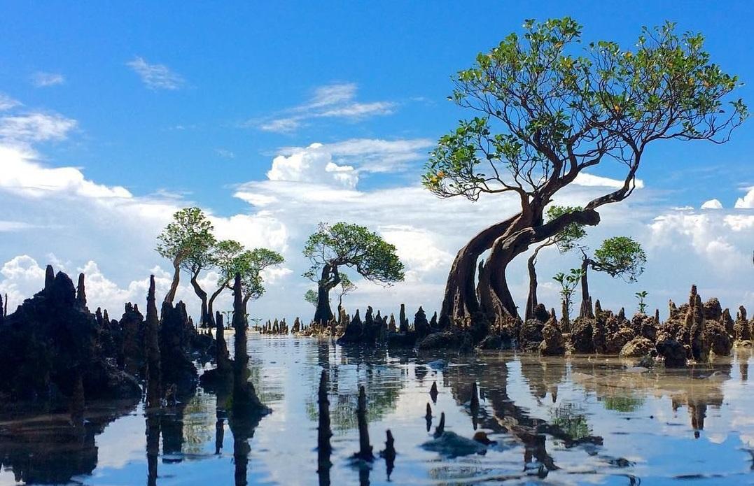 walakiri beach mangrove