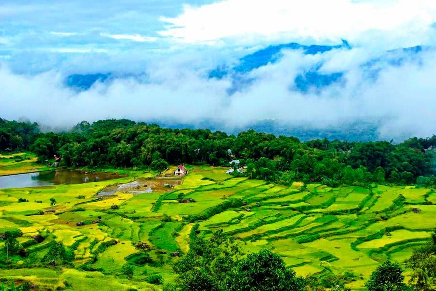 batutumonga rice fields