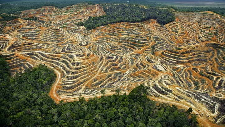 deforestation of borneo