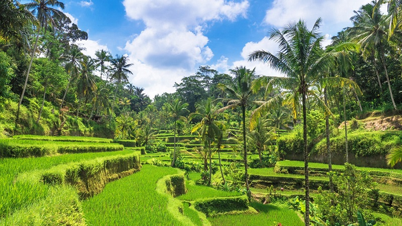 things to do in indonesia ubud