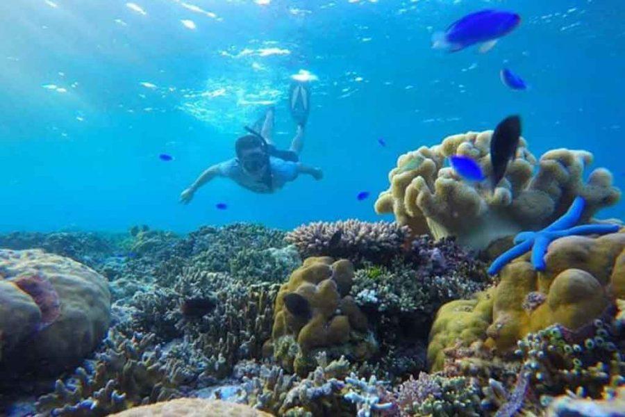 wakatobi snorkeling