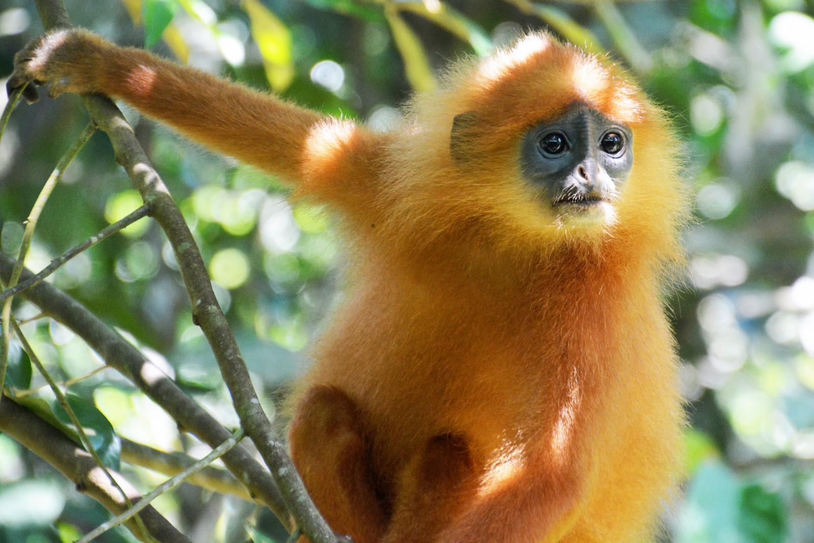 Rainforest Borneo