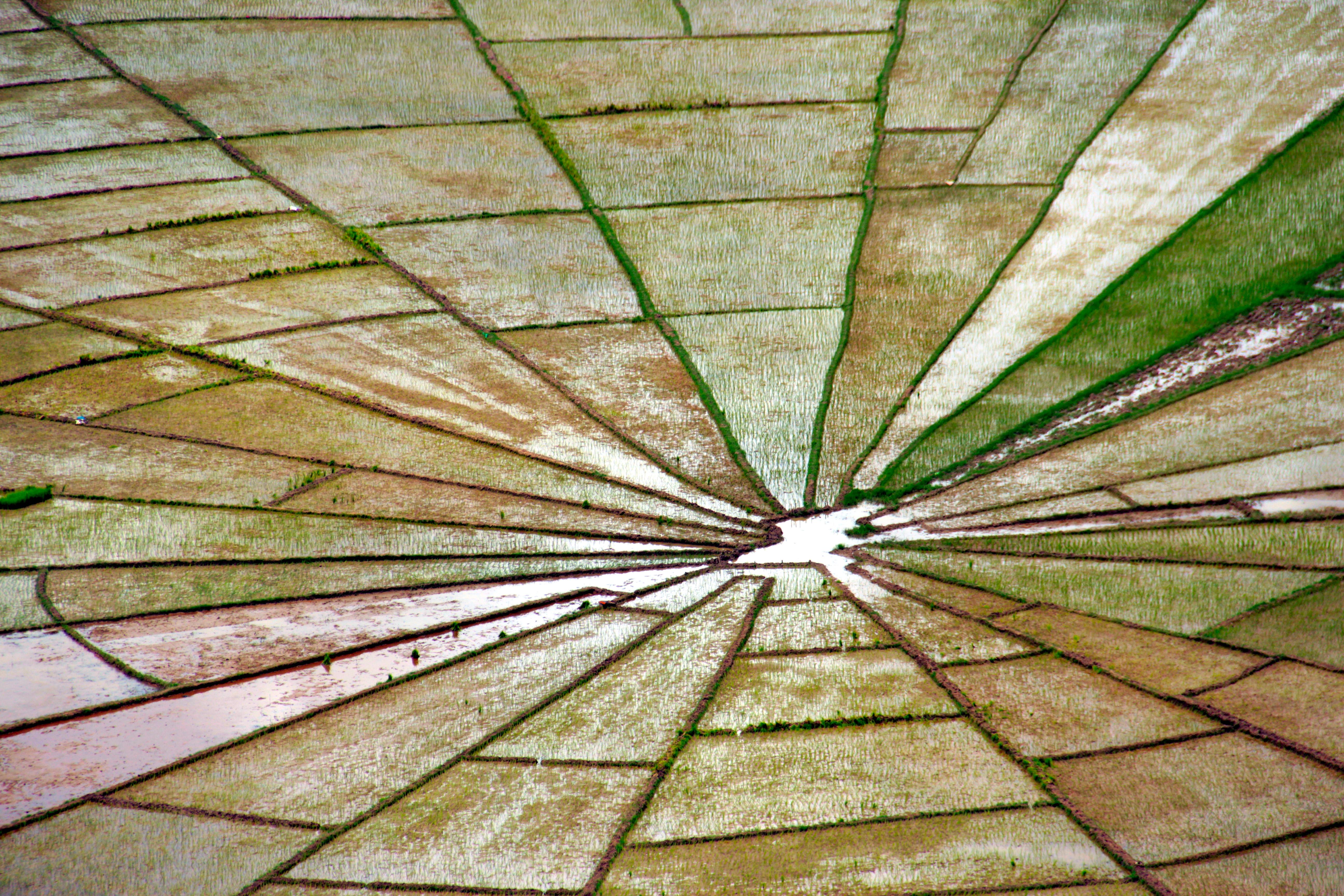 Spiderweb Ricefields Flores