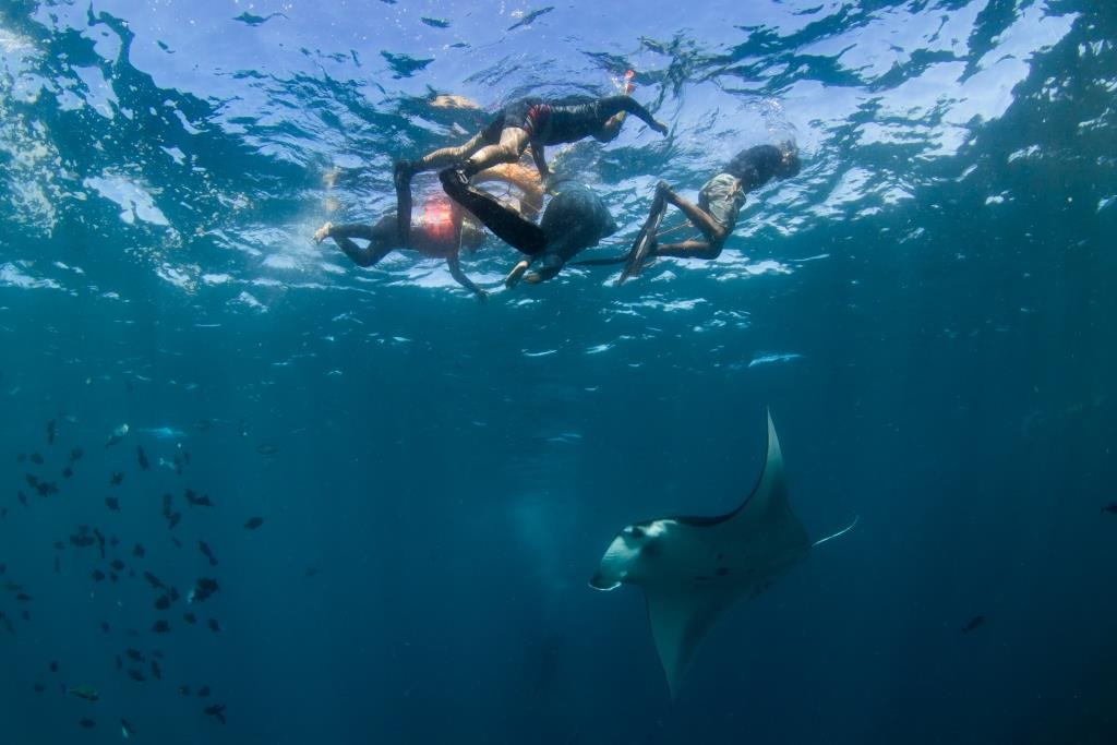snorkeling with manta rays in nusa penida
