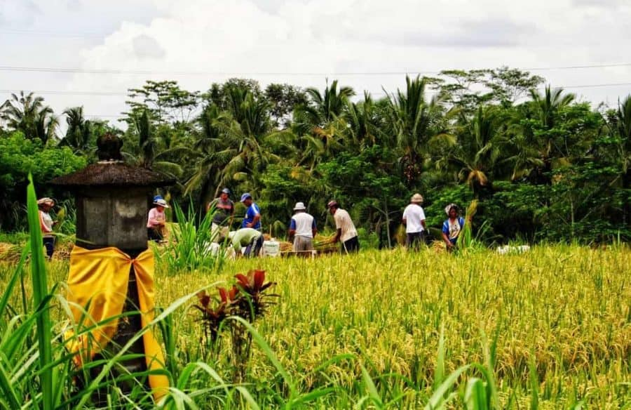 Balinese Rural Farming Experience