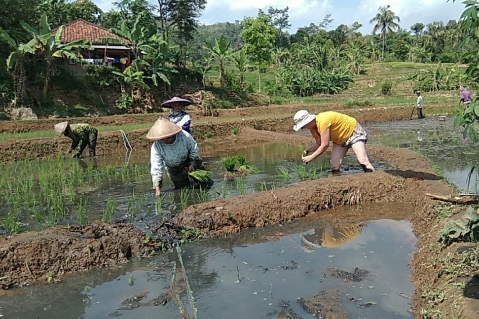 farming java