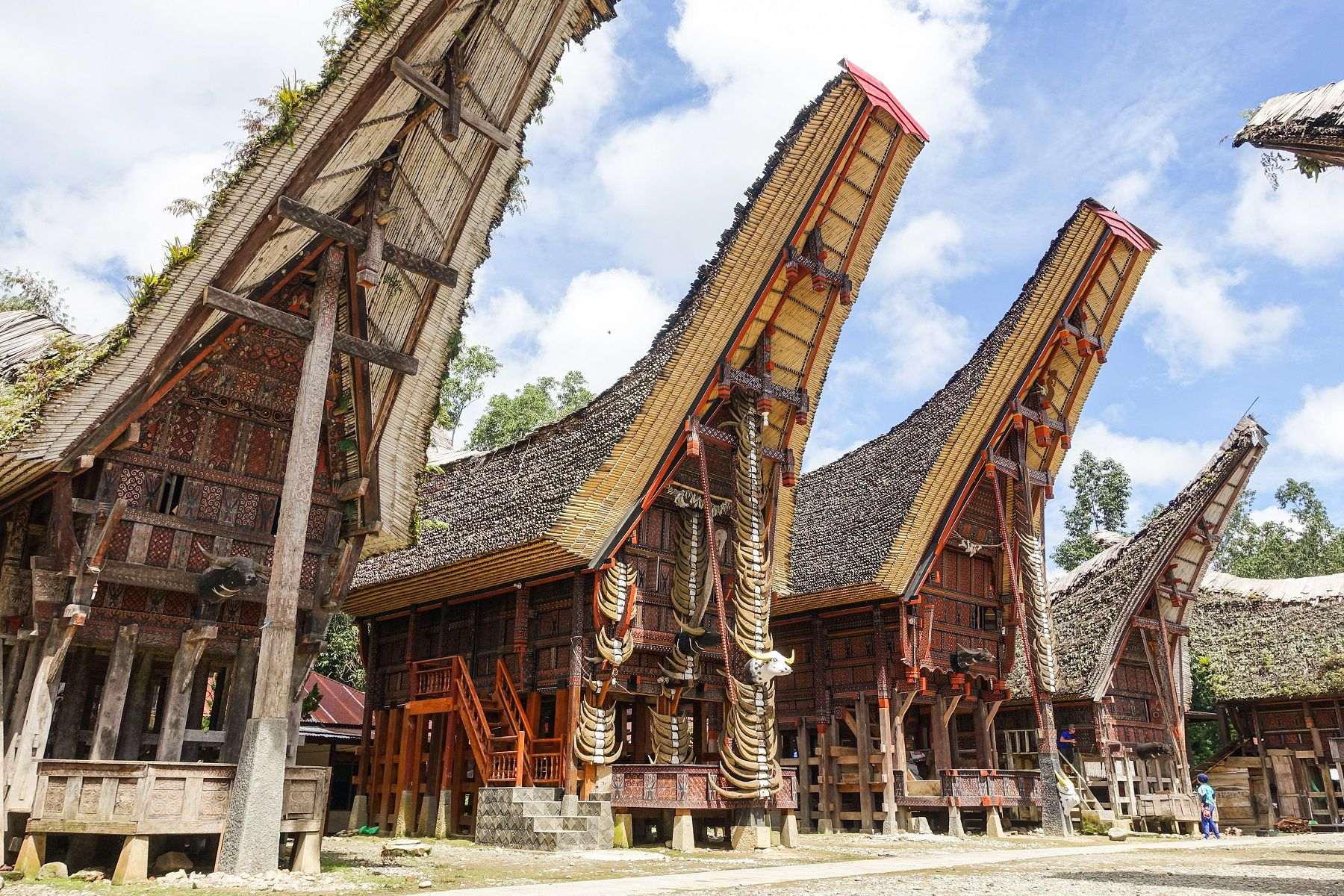 local experience in toraja