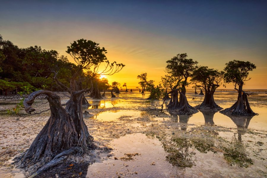 Sumba Walakiri Mangrove Beach