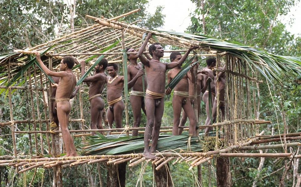 Korowai Tribe tree house