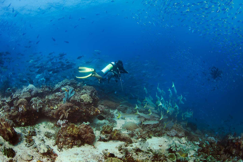 undersea water of papua