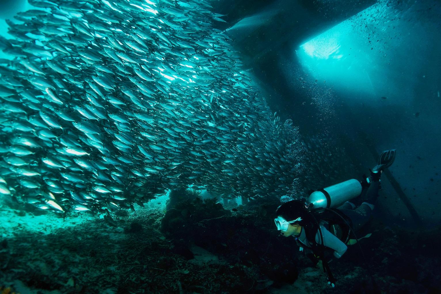 arborek island diving spots
