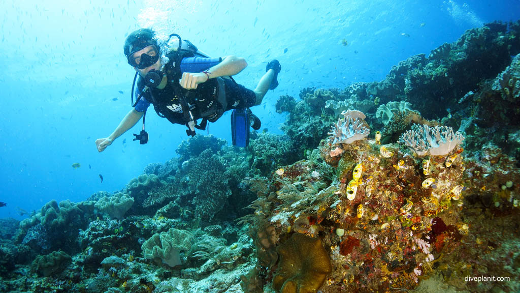 blue magic diving spots in raja ampat