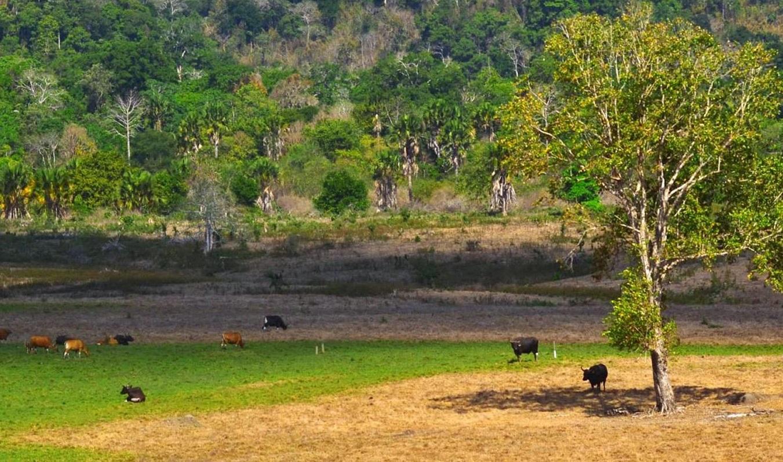 Alas Purwo National Park, East Java