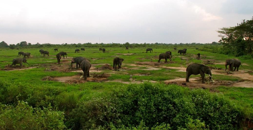 Explore Way Kambas National Park