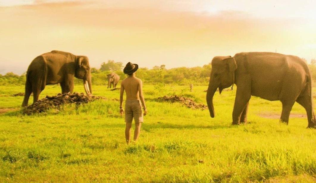 Indonesia wildlife in Way Kambas National Park