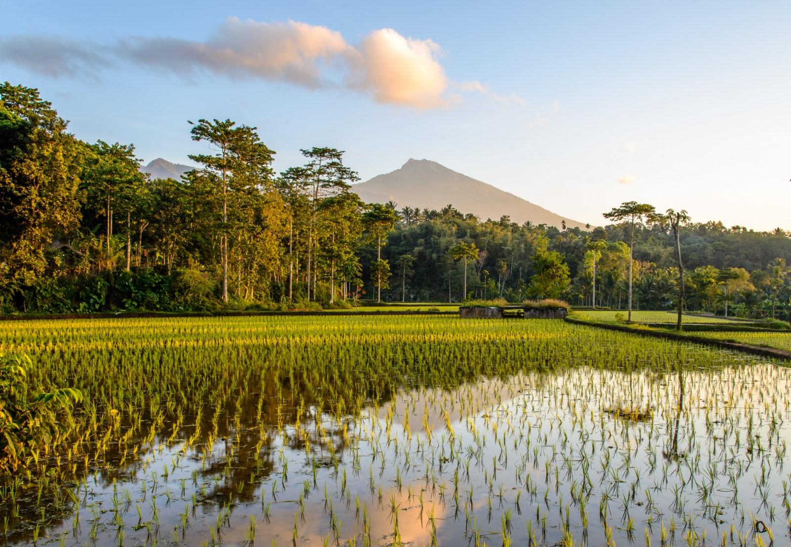 Lombok scenary