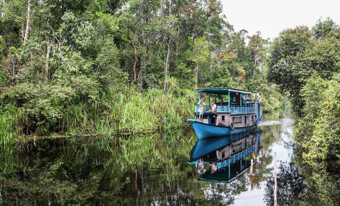 Tanjung Puting National Park, indonesia wildlife