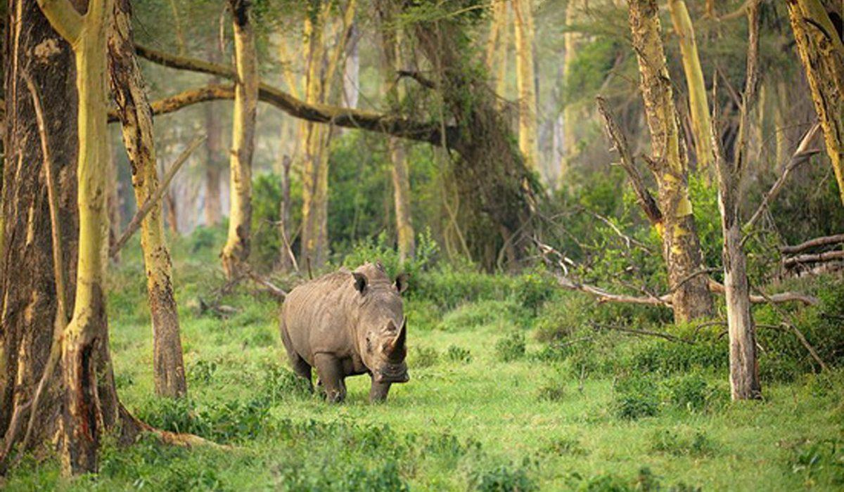 Ujung-Kulon-National-Park