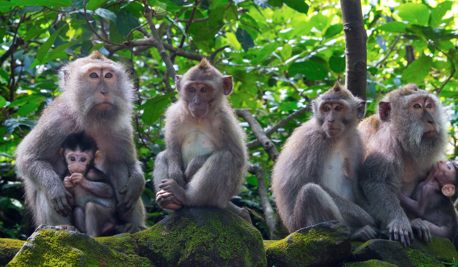 bali family holidays in ubud monkey forest