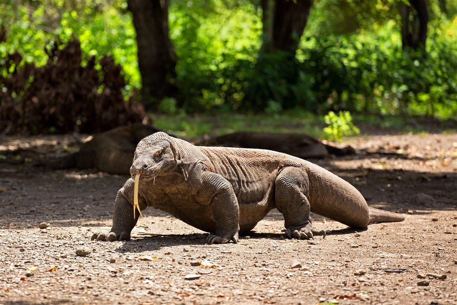 komodo national park unesco world heritage site
