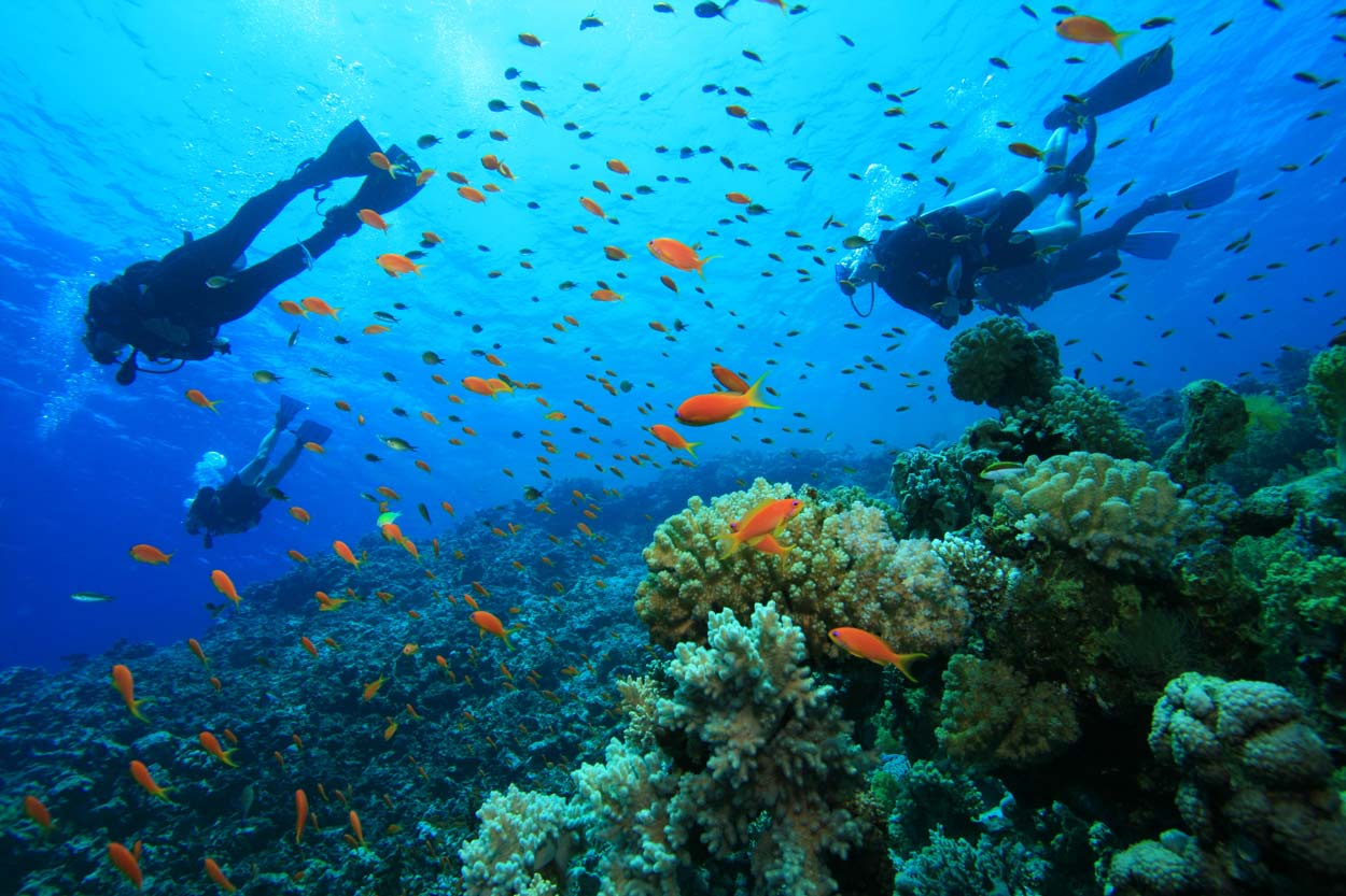 Diving in gili air to explore the underwater beauty of Lombok