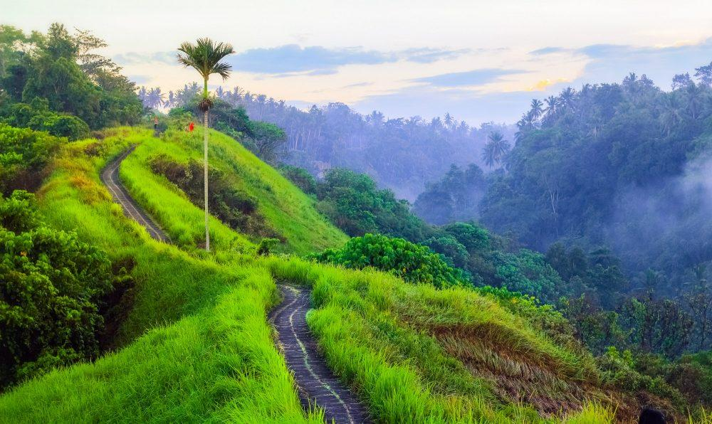 explore the campuhan hill in ubud
