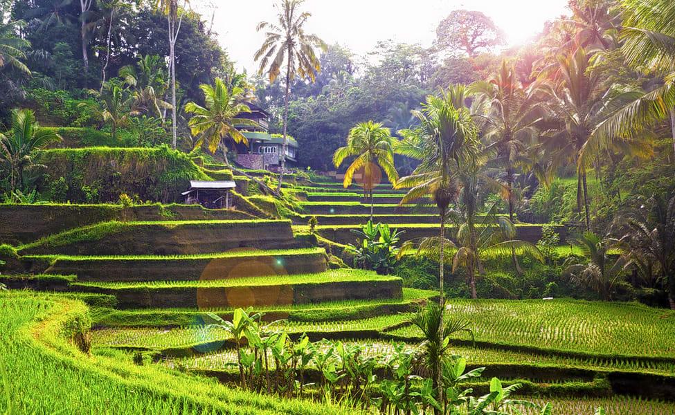 tegalalang rice terrace ubud tour