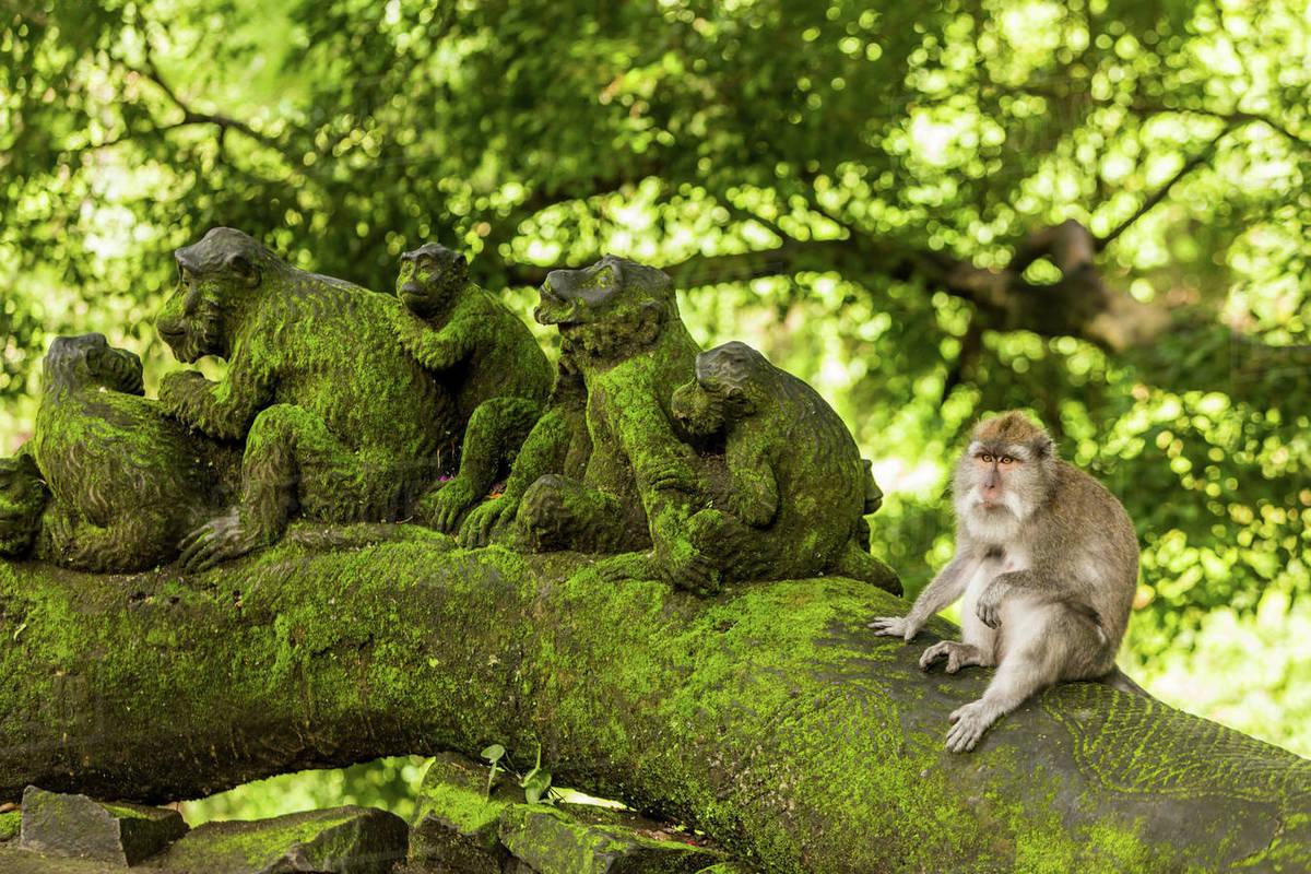 to see ubud sacred monkey forest