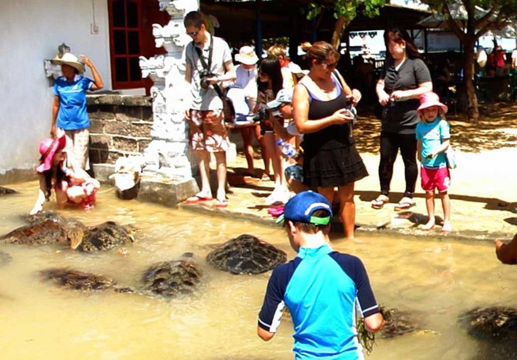 turtle island in tanjung benoa bali