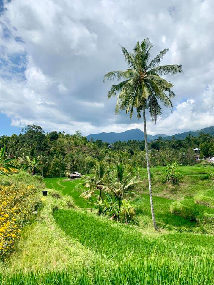 Ricefield view North Bali