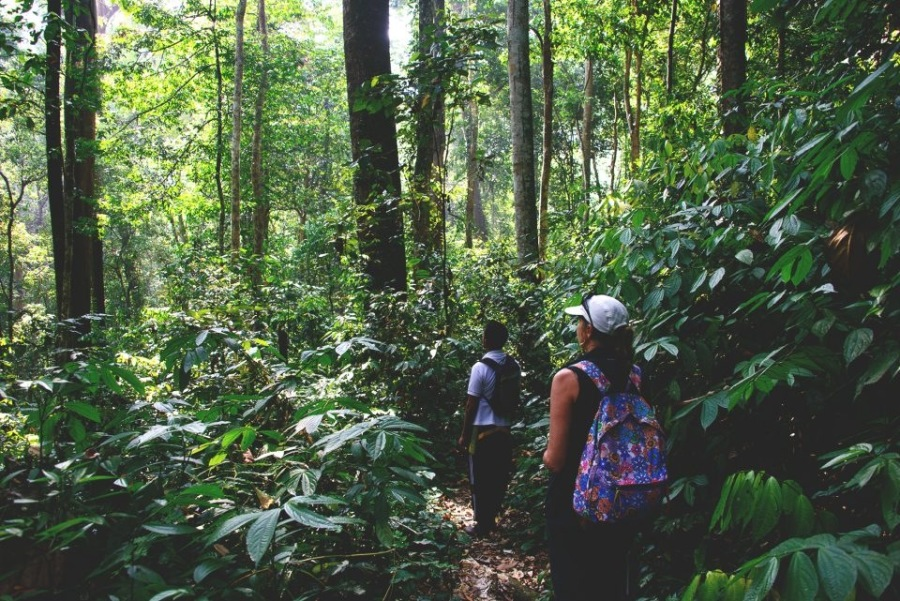 leuser national park jungle