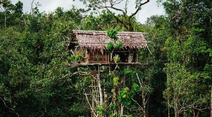 rumah tinggi by korowai tribe in southern papua
