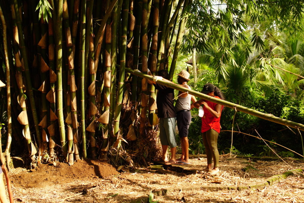 the glorifying of bamboo in sanur village festival