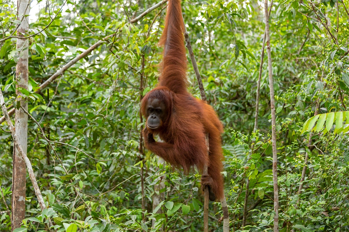 wild animals in the leuser national park forest