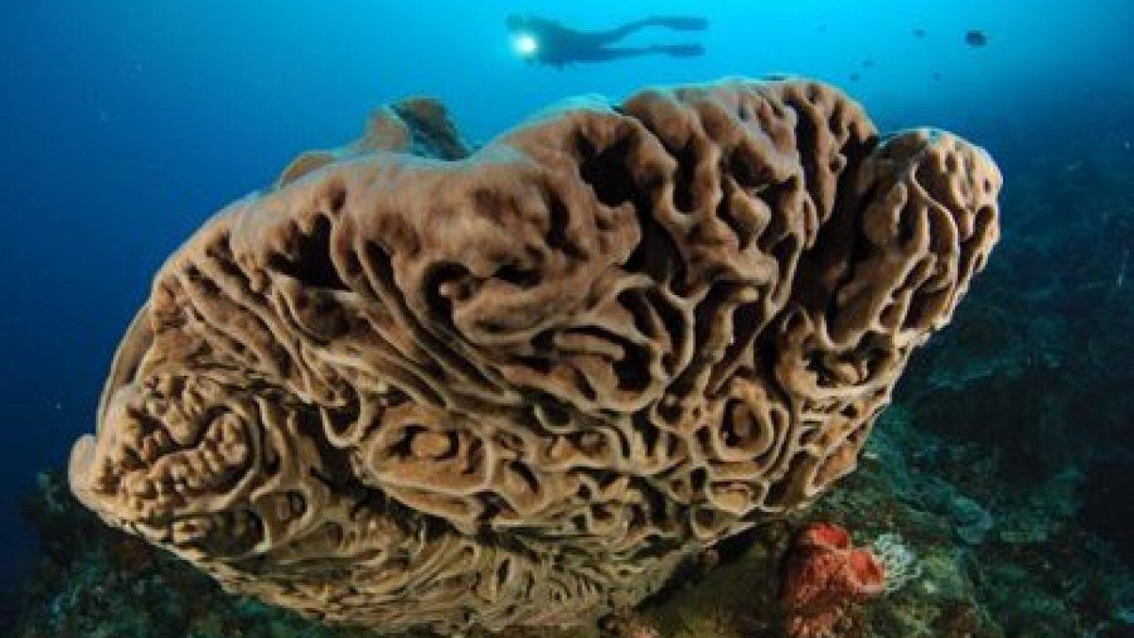 Salvador Dali sponges in olele marine park