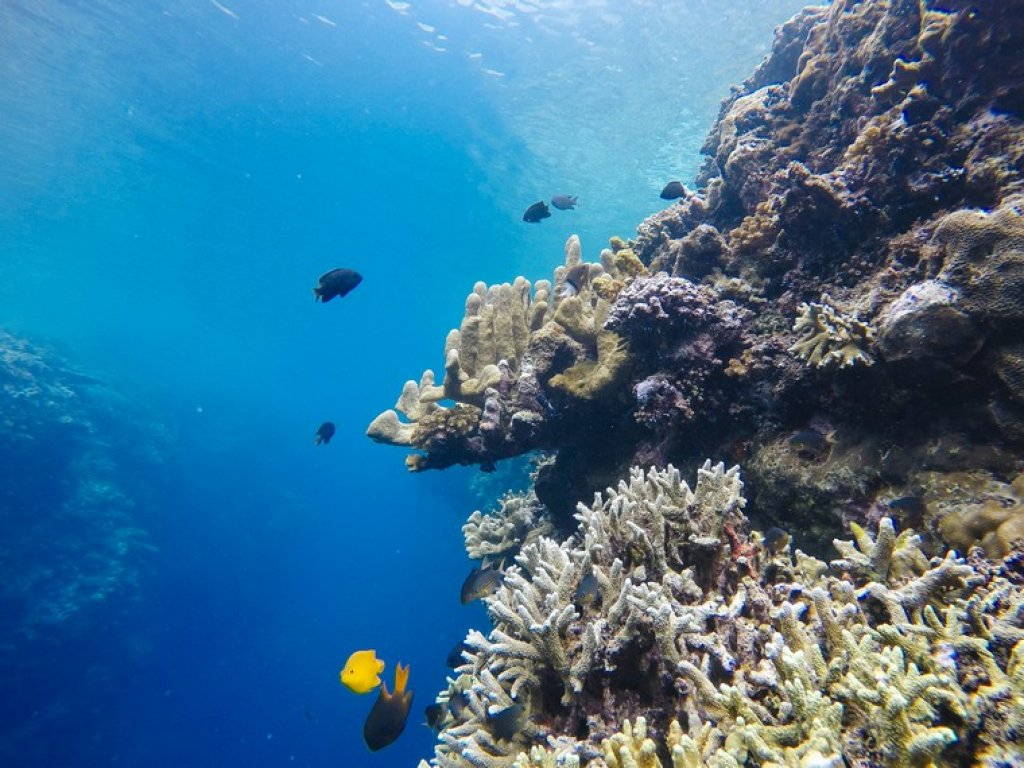 underwater view of olele marine park in gorontalo