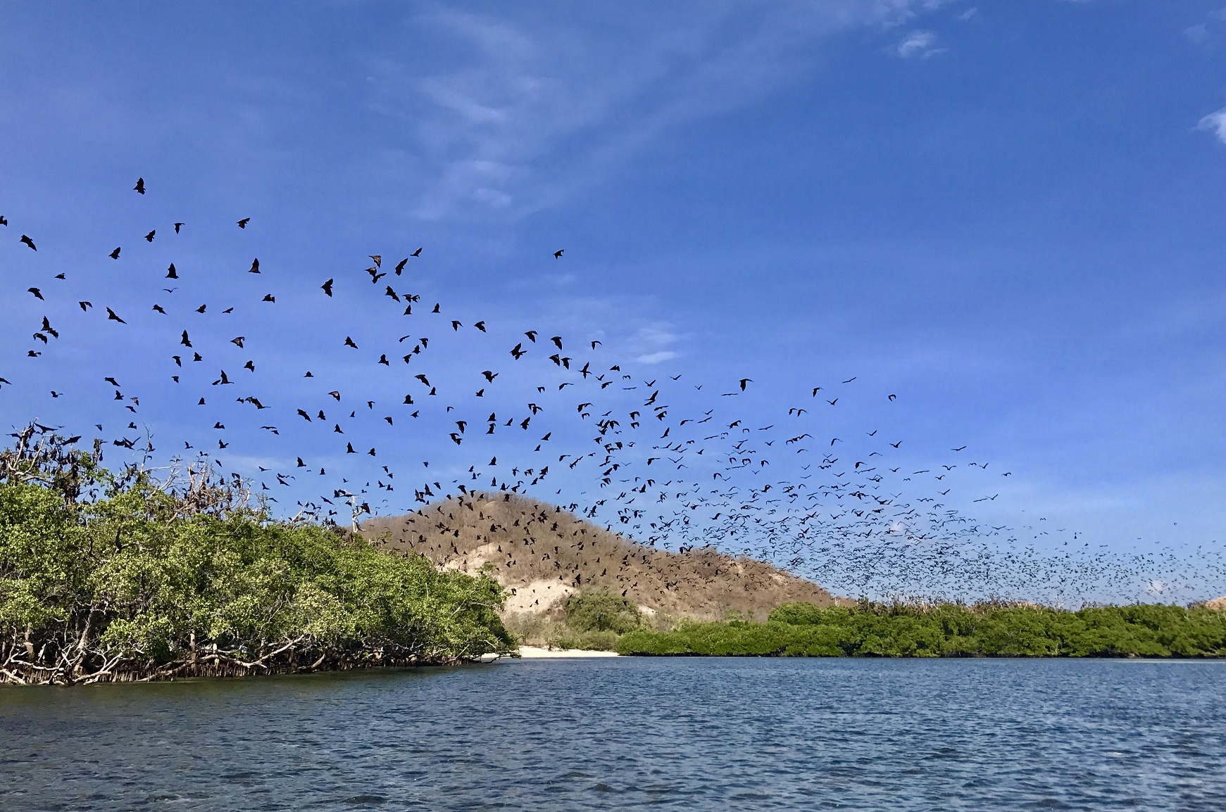 The island of Ontoloe is a habitat for thousands of giant bats