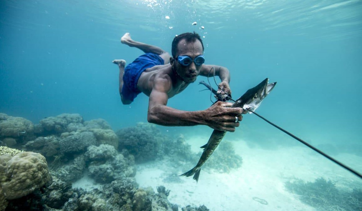 bajau tribe is good at free diving