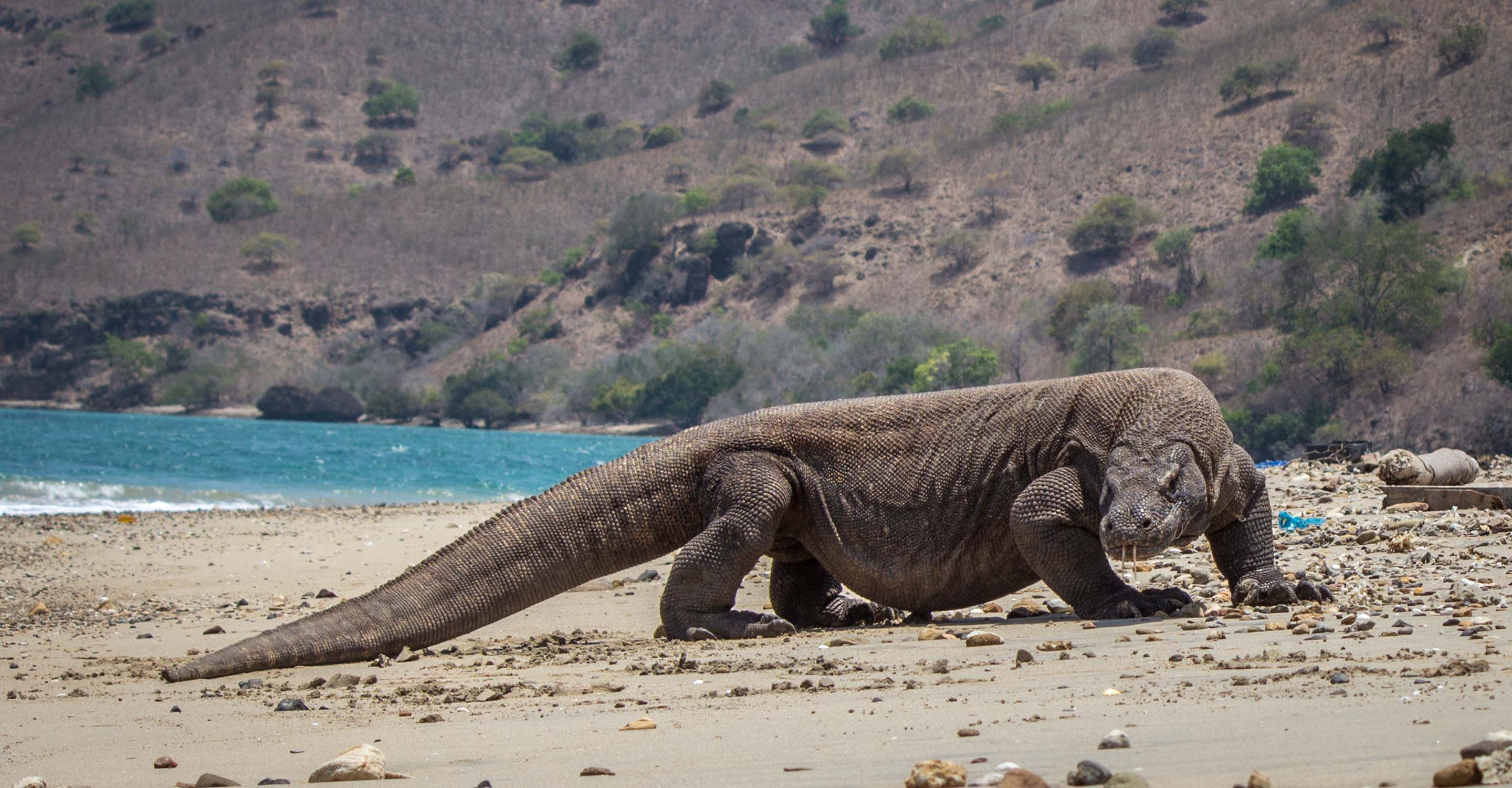 best place to visit in komodo island