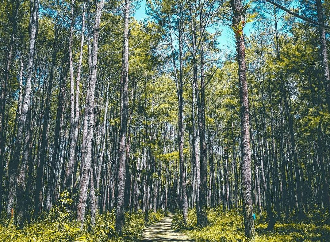 explore lambusango forest in buton
