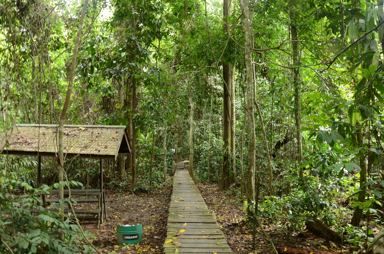 explore the kutai national park