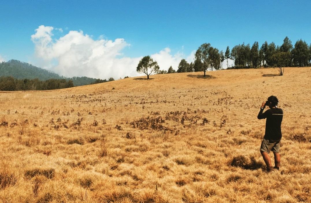 Argopuro Mountain Savanna