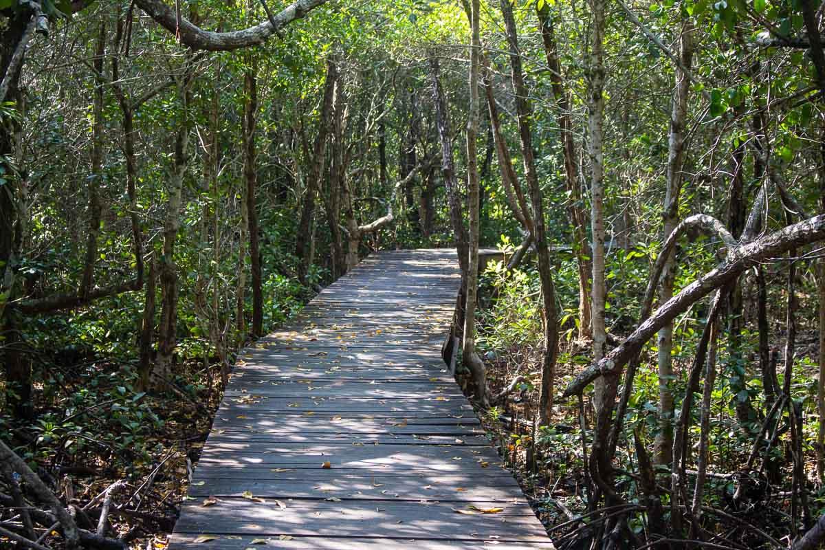 Trekking in the Karimunjawa mangrove forest