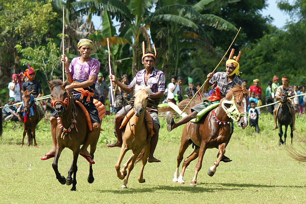 pasola tradition in sumba