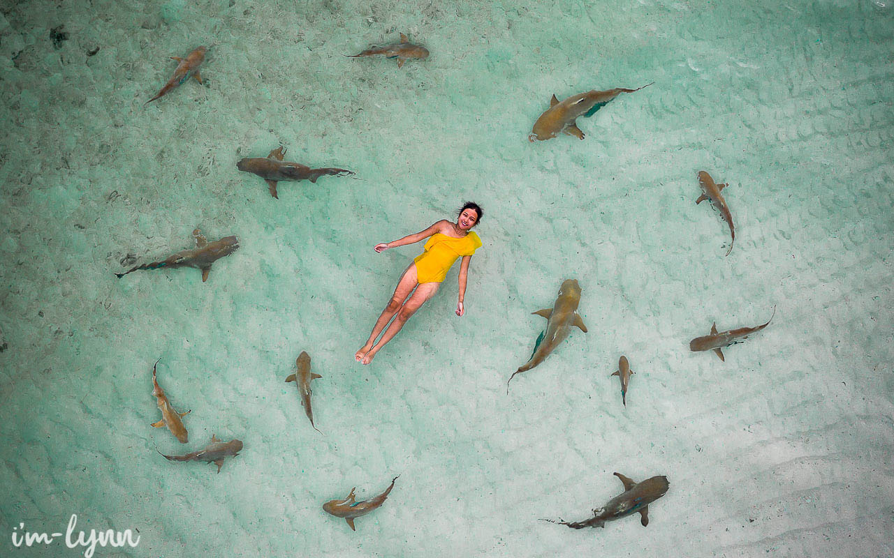 swim with shark in wayag island